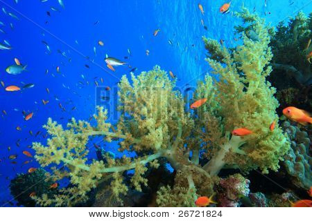 Beautiful Coral Reef and Colorful Fish