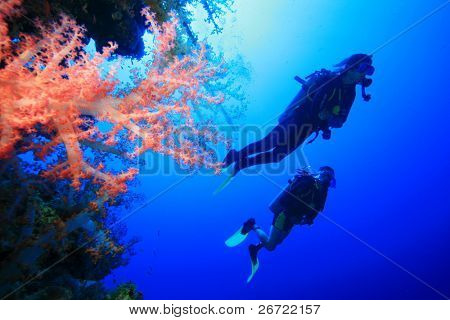 Scuba Divers and Colorful Soft Corals in the Red Sea
