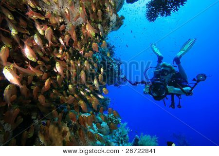 Underwater Photographer diving on a coral reef