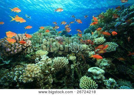 schönes Korallenriff