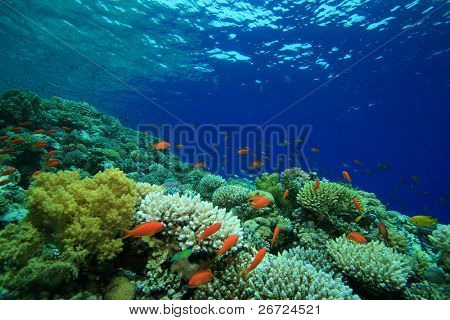 Coral Reef in clear blue water