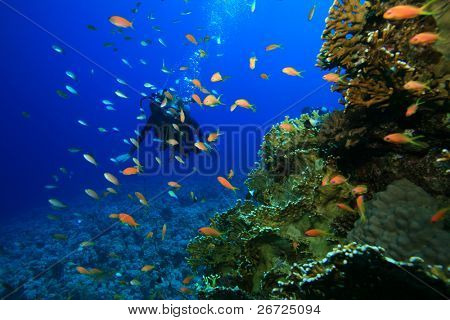 Fish, Coral and Scuba Divers