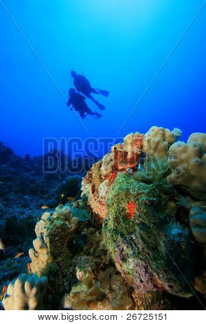 Smallscale Scorpionfish with Scuba Divers in background