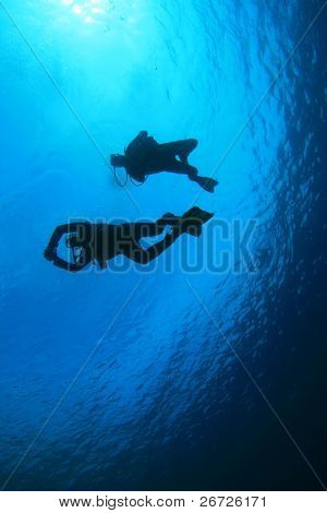 Underwater image of Group of Scuba Divers silhouetted against ocean surface