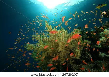 Underwater image of Tropical Fish on a Coral Reef in Sunlight