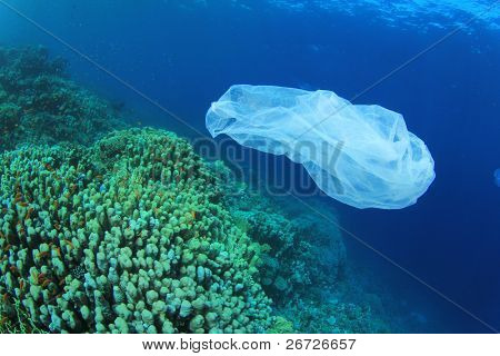 Environmental Problem - plastic trash on a coral reef. (I cleared up this and other rubbish from the area after taking the photo)