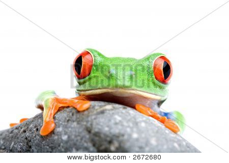Frog Looking Over Rock Isolated