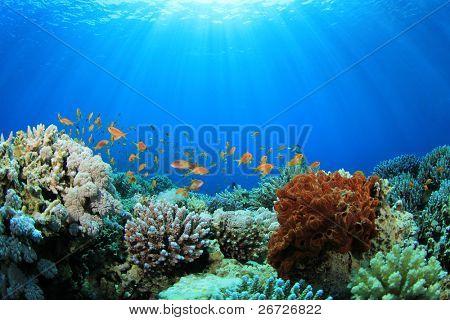 Recifes de corais e peixes tropicais na luz solar