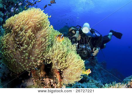 Underwater Photographer on Scuba dives with Clownfish at Anemone City in the Red Sea