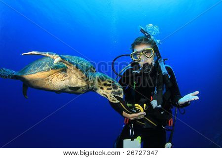 Female Scuba Diver encounters friendly Hawksbill Sea Turtle