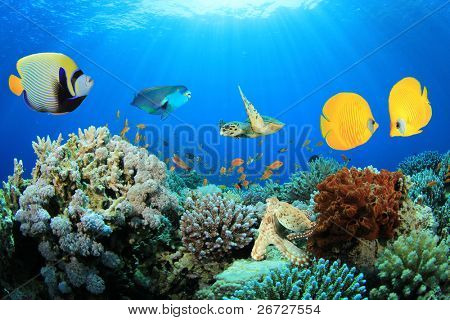 Composite Image of Butterflyfish, Angelfish, Parrotfish and Sea Turtle on a Coral Reef