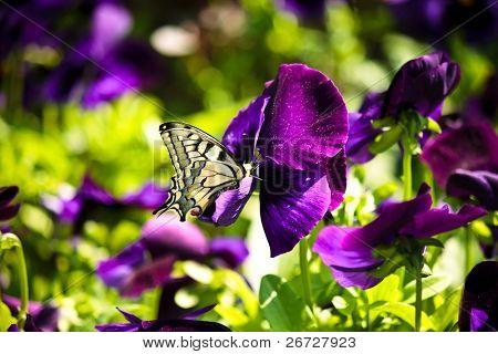 primer plano de una hermosa mariposa en una flor morada
