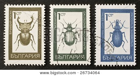 BULGARIA - CIRCA 1968: three stamps printed in Bulgaria show illustrations of insects of Coleoptera order: Lucanus Cervus, Calosoma Sycophanta and Procerus Scabrosus. Bulgaria, circa 1968