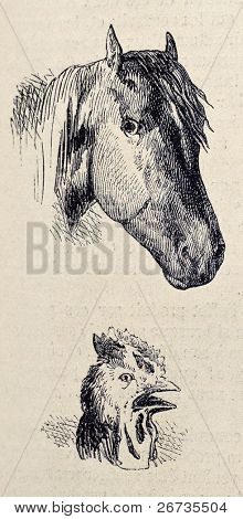 Antique illustrations of horse and rooster heads. Original, from drawing of Blanchard and Lambert, was published on L'Illustration, Journal Universel, Paris, 1860