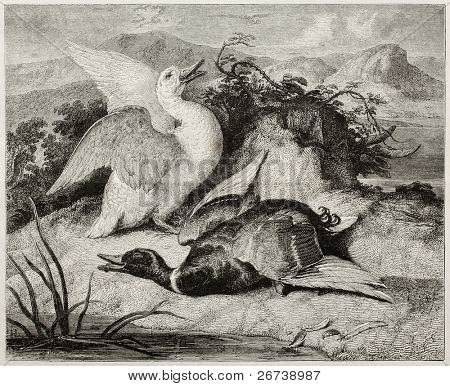 Old illustration of duke and drake, alive and dead. Created by Freeman after Landseer, published on Magasin Pittoresque, Paris, 1850