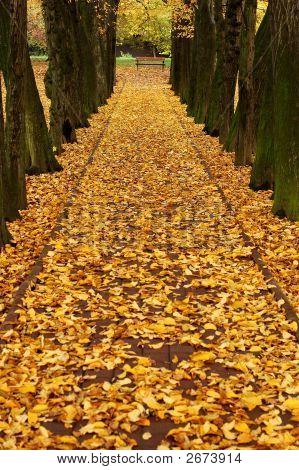 Callejón de otoño