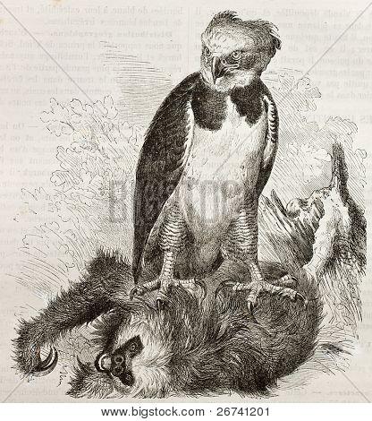 Old illustration of Harpy Eagle (Harpia harpyja). Created by Kretschmer, published on Merveilles de la Nature, Bailliere et fils, Paris, 1878