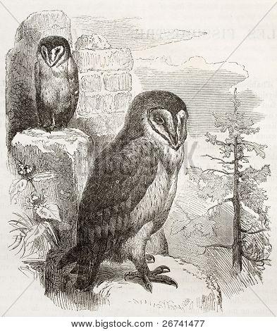 Barn Owl old illustration (Tyto alba). Created by Kretschmer and Jahrmargt, published on Merveilles de la Nature, Bailliere et fils, Paris, 1878