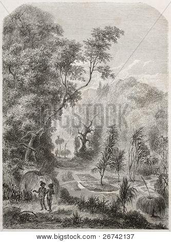 Australianos enterros na floresta, antiga ilustração. Criado por Lancelot após Mitchell, publicado em