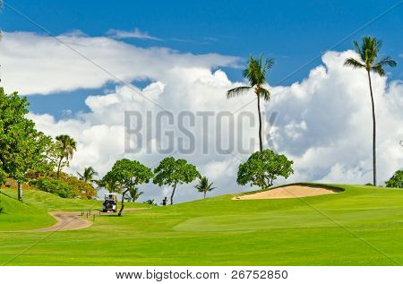 Golf place with gorgeous green and palm tree over blue sky with white clouds view