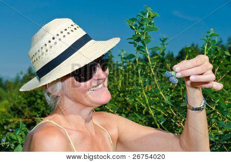 Gardening - woman harvesting fresh blackberries at farm