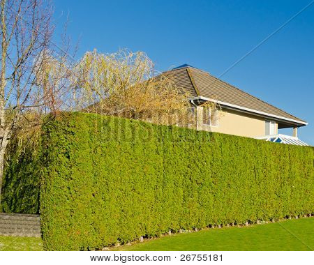 Privacy and Security Concept. House hidden behind the green hedge.