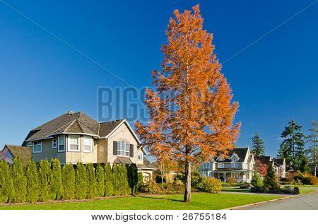 Friendly neighborhood with a fantastic colourful tree in the foreground.