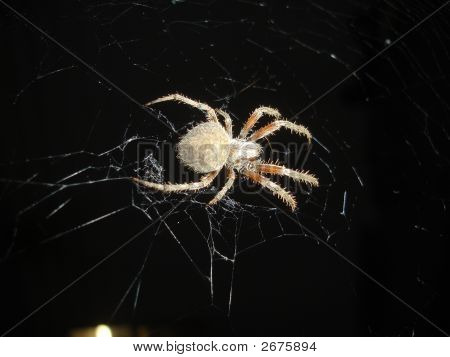 Charlotte And Her Web Close