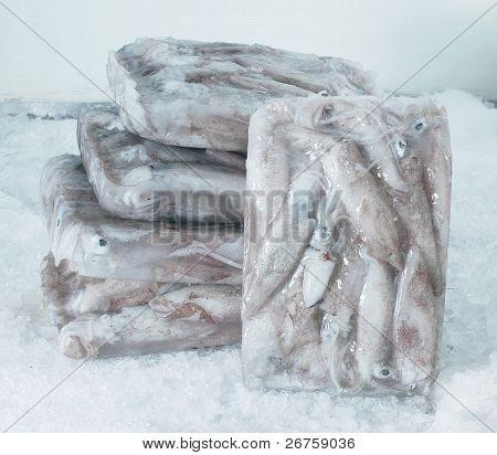 Ice blocks of squids.