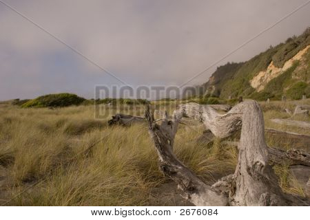 Beach Grass And Driftwood