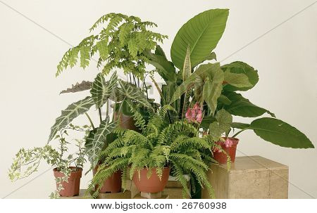 Assorted green houseplants in pots