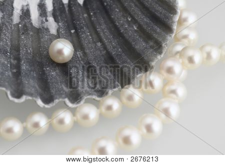 White Pearls And Shell
