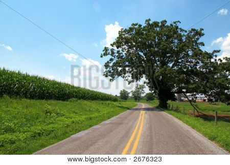 Baum vom Straßenrand