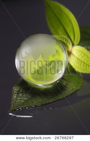 stock image of the glass globe with leaf