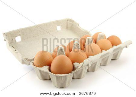 Eggbow Over White