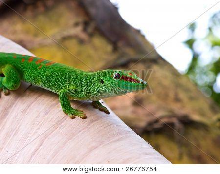 Green gecko on the leaf (Zurich zoo)