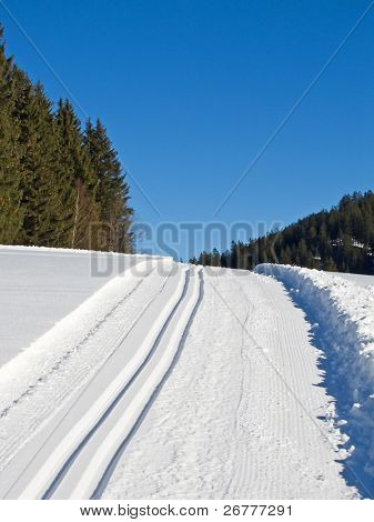 Ski tracks through the winter forest