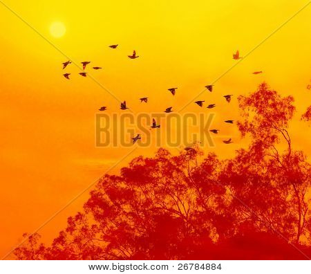 The trees against sunlight over sky background in sunset with flighting birds