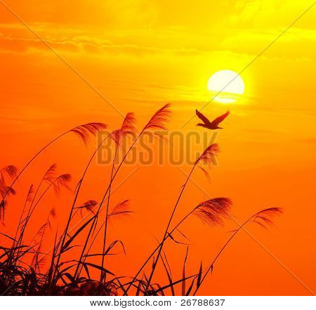 sunset with a flighting bird