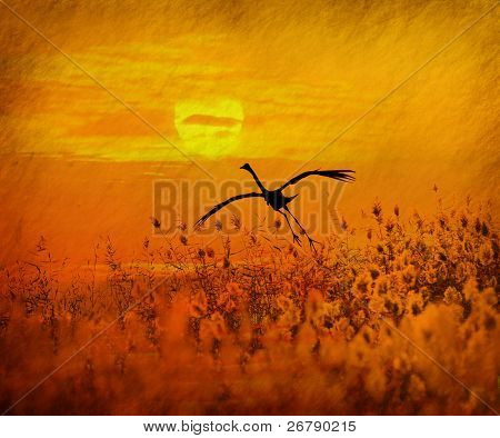 bulrushes against sunlight over sky background in sunset with a flighting bird