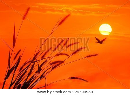 bulrushes against sunlight over sky background in sunset