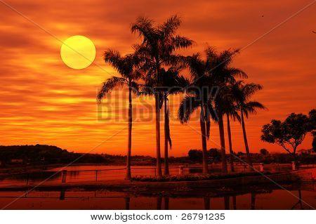 Palm boom silhouet op paradijs zonsondergang op het strand