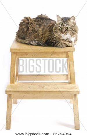cat on stool