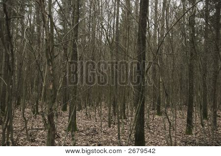 Mysterious Wood