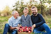 A Small Boy With Father And Grandfather Sitting In Apple Orchard In Autumn. poster