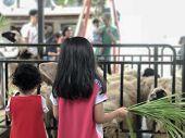 Little Girl Feeds White Goat At Farm. Cute Little Kid Feeding A Animal. Little Girl Holding Some Gra poster