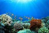 stock photo of aquatic animals  - Coral Reef and Tropical Fish in Sunlight - JPG