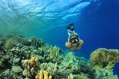 image of biodiversity  - Beautiful Woman snorkeler explores coral reef - JPG