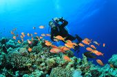stock photo of biodiversity  - Scuba Diver swims over Coral Reef with Tropical Fish - JPG