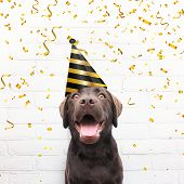 Happy Birthday Card Crazy Dog With Party Hat Is Smiling In De Camera Agianst White Brick Background  poster